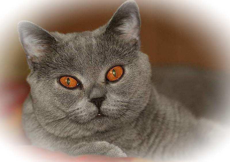 sundaycat