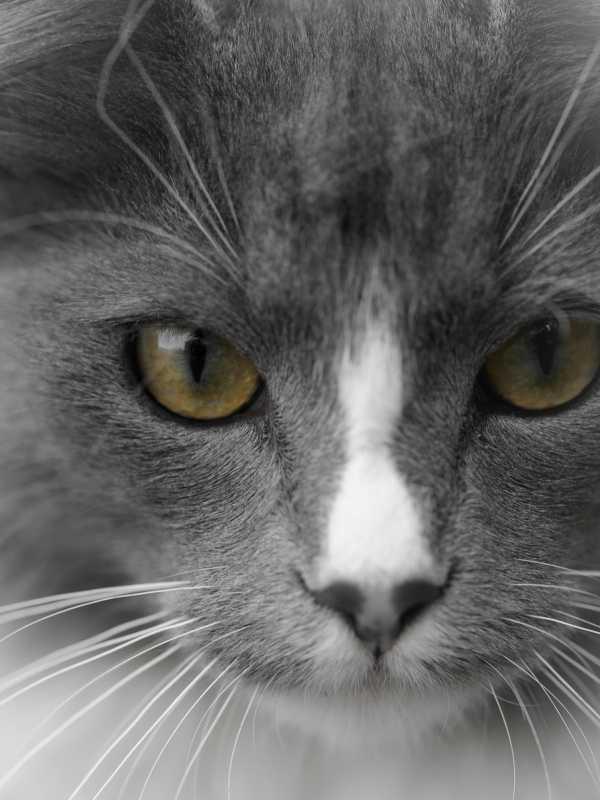 caturday20klein